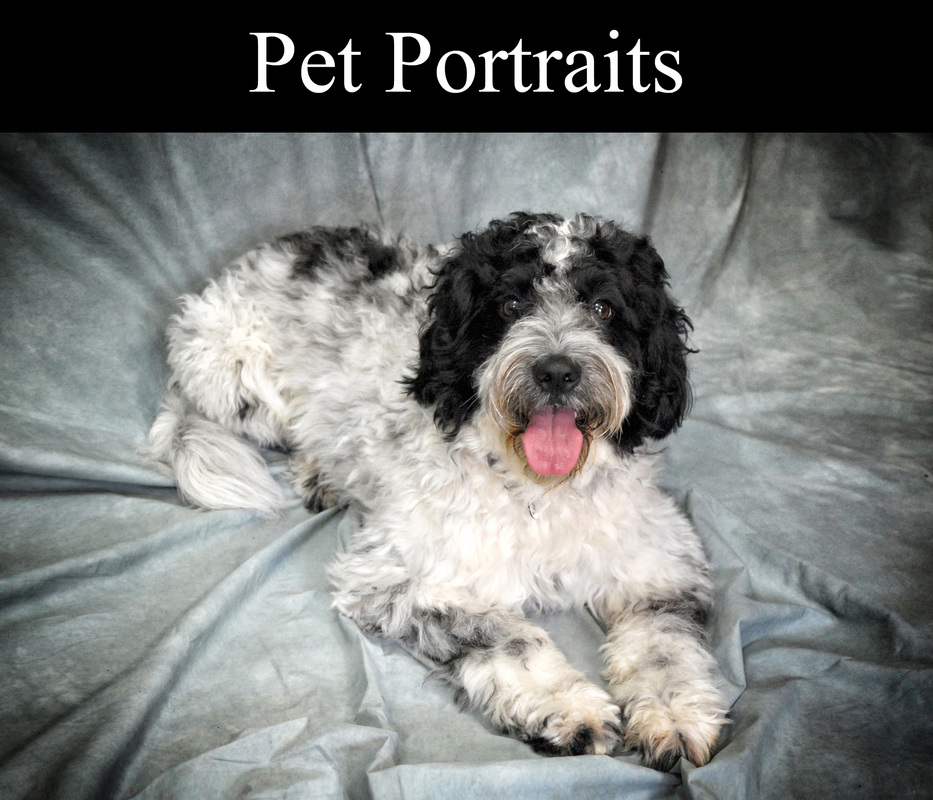 Harrow Pet Photographer